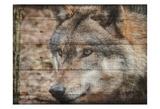 Alfa Wolf 2 Kunstdrucke von Sheldon Lewis