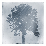 Frosted Tree Silhouette 1 Print by Kimberly Allen