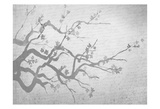 Cherry Blossom Branch in Silver Prints by Kimberly Allen