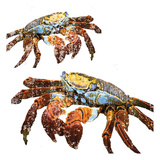 Winter Crabs Art by Melody Hogan