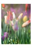 Tulip Swim B Prints by Sonja Quintero