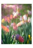 Tulip Swim A Print by Sonja Quintero