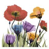 Flowerscape Poster von Albert Koetsier