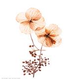Petal Blooms Posters by R. Vancura