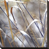 Grass 9 Stretched Canvas Print by Ken Bremer