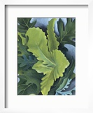 Green Oak Leaves, c.1923 Posters by Georgia O'Keeffe