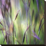 Grass Abstract 4 Stretched Canvas Print by Ken Bremer