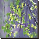 Spring Leaves Stretched Canvas Print by Ken Bremer