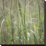 Grass Square 32 Stretched Canvas Print by Ken Bremer