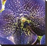 Orchid Square Stretched Canvas Print by Ken Bremer
