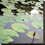 Lily Pads Stretched Canvas Print by Ken Bremer
