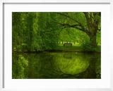 Green World Framed Photographic Print by Irene Suchocki