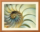 Close-up of Nautilus Shell Spirals Framed Photographic Print by Ellen Kamp