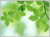 Selective Focus Close Up of Green Leaves Hanging from Tree Framed Photographic Print