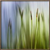 Moss Framed Photographic Print by Ursula Abresch