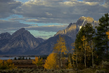 Grand Teton Mountains and Trees in Autumn Photographic Print by Beverly Joubert