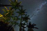 The Milky Way Above the Atlantic Rainforest Jungle and Palm Trees Fotografisk tryk af Alex Saberi