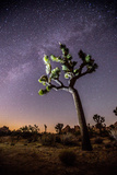 A Joshua Tree under the Milky Way Fotografisk tryk af Ben Horton