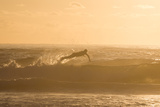 A Surfer Dives over a Wave on Praia Da Joaquina Beach on Florianopolis Island Fotografisk tryk af Alex Saberi