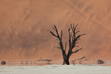 An Acacia Tree and Sand Dune in Namibia's  Namib-Naukluft National Park Photographic Print by Alex Saberi