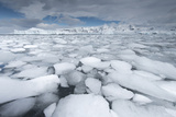 Sea Ice Floats in Fournier Bay, Antarctica Photographic Print by Jeff Mauritzen