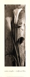 Driftwood Lilies Posters by Sondra Wampler