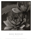 Water Lily II Prints by Dana Buckley