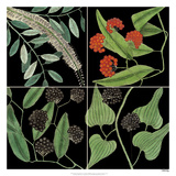 Graphic Botanical Grid IV Giclee Print by Mark Catesby
