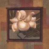 Spring Magnolia I Prints by Diane Cooper
