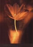 Bronze Tulip I Posters by John Butler