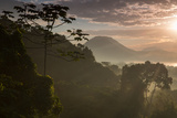 Serra Do Mar Forest in Sao Paulo State in Brazil Photographic Print by Alex Saberi