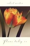 Flame Tulip II Kunst af Robert Mertens