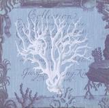 Seaside Coral III Prints by Paula Scaletta