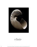 Nautilus (small) Prints by Sondra Wampler