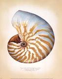 Chambered Nautilus Poster von Richard Van Genderen