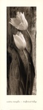 Driftwood Tulips Prints by Sondra Wampler