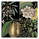 Graphic Botanical Grid II Giclee Print by Mark Catesby