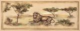 Safari Lion Posters by Ann Brodhead