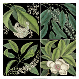 Graphic Botanical Grid I Giclee Print by Mark Catesby