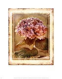 Hydrangea Posters by Linda Maron