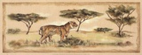Safari Tiger Posters by Ann Brodhead