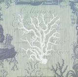 Seaside Coral IV Prints by Paula Scaletta