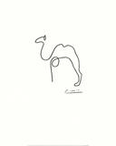 Kamelen Posters af Pablo Picasso