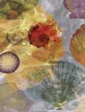 Shell Suite I Kunst af Robert Mertens