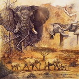Safari II Print by Gary Blackwell