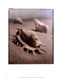 Seashell III Prints by Sondra Wampler