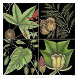 Graphic Botanical Grid III Giclee Print by Mark Catesby