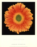 Radiance Prints by Harold Feinstein