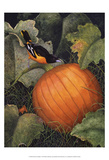 Oriole & Pumpkin Posters by Marcia Matcham