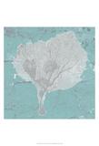 Graphic Sea Fan VIII Prints by  Studio W